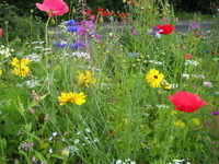 cottage_garden_plants_direct