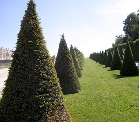 ornamentaltree