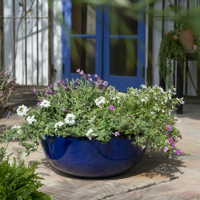 Primrose - Cobalt Blue Planter