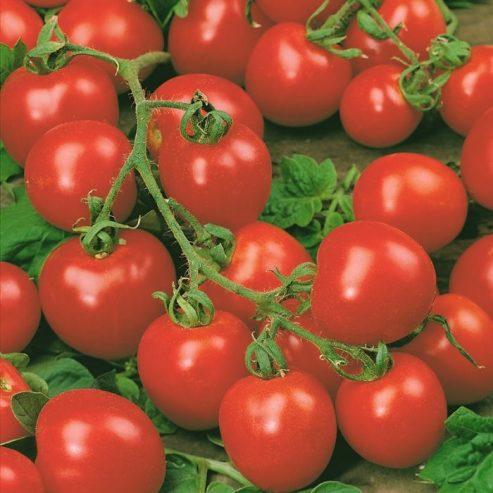 1 primrose vegetables tomatoes