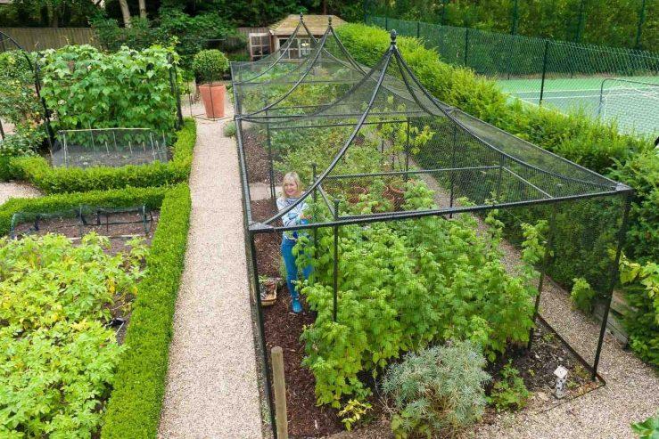 Harrod peak-roof-steel-fruit-cage